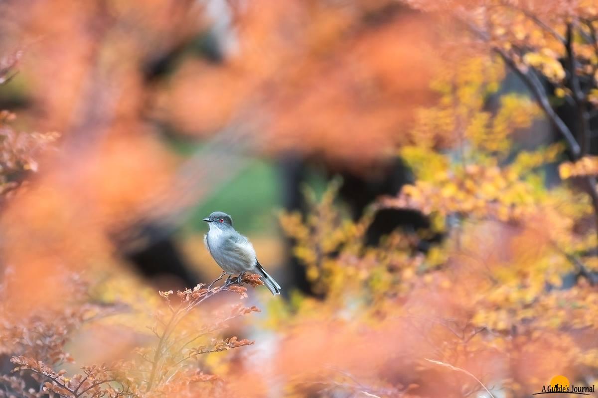 patagonia birds